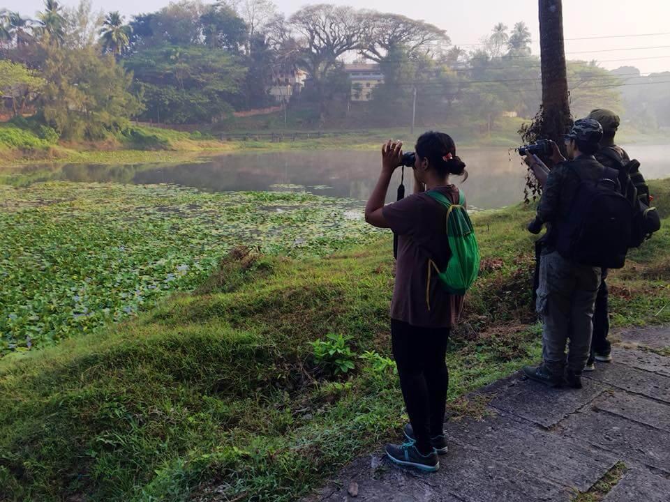 andaman bird watching