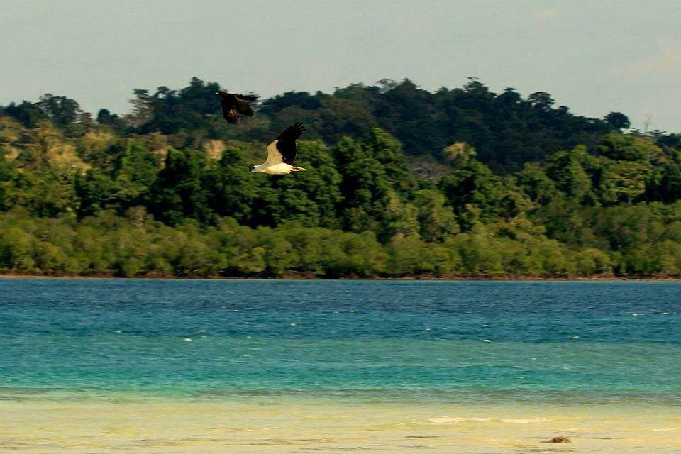 Bird Watching in Andaman at Port Blair and Havelock
